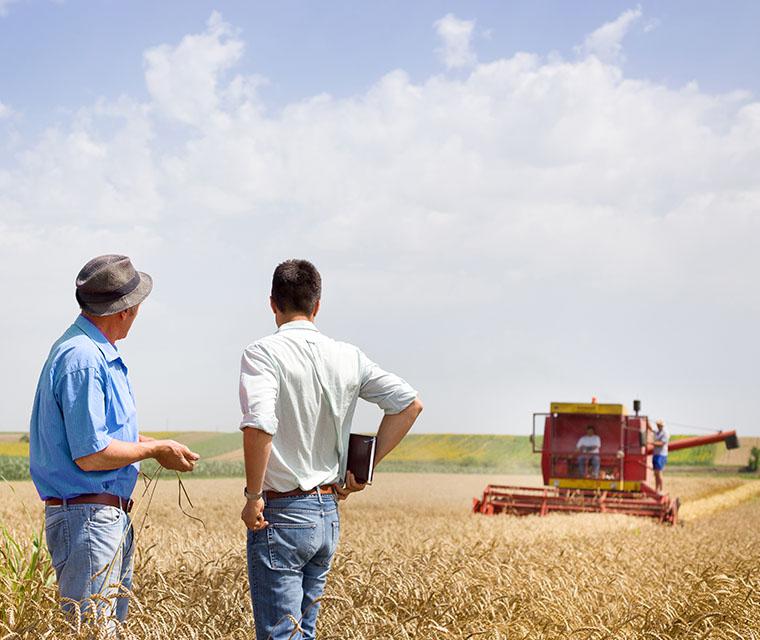 Farm-grain-tractor-harvest